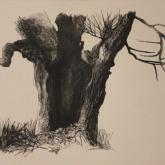 studie stromu - tuš